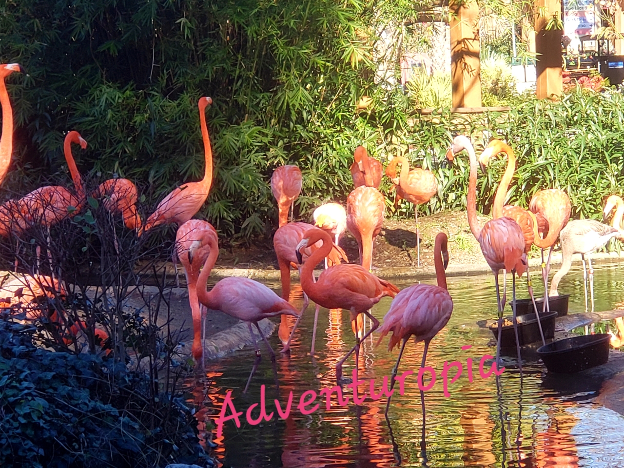 Riverbanks Zoo and Garden – Columbia, South Carolina