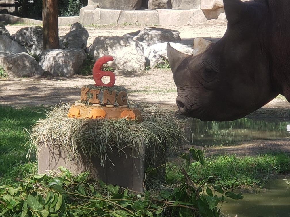 King the Rhino'sBirthday